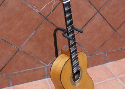 cipres-abeto-Fernando-Moreno